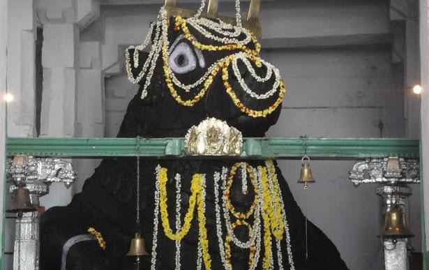 scared bull walk, tour of basavanagudi